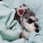 老犬介護の仕方~寝たきりの床ずれ予防~