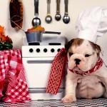老犬とタンパク質