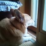 犬の日向ぼっこと紫外線の効果