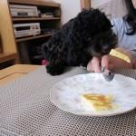 犬に食べさせてはいけない危険なもの!