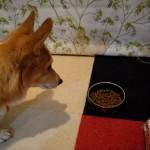 犬の食中毒にご注意を