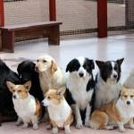 犬種別、老犬の長生きの秘訣!