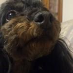 静電気が犬に及ぼす悪影響!