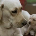 犬のあまがみ・噛み癖、どうすればいいの??