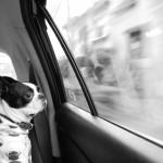 愛犬とドライブのポイント♪