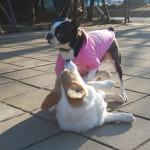 犬のカーミングシグナルで愛犬の気持ちを知る。