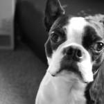 4年…犬の防災対策を改めて考える