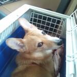 愛犬が交通事故に合わないために