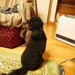 焦げる?暖房器具と犬の低温やけど