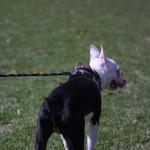 絶対に迷子犬にさせない!愛犬の鑑札は義務です。