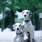 犬の避妊・去勢は必要なものなの?