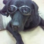 犬の雪目と紫外線!