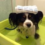 犬にも温泉の効果?