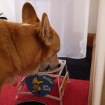 老犬介護の仕方~食事の介護~