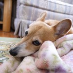 犬もレム睡眠をする?