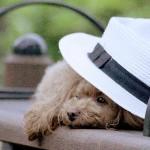 愛犬のクールビズ??夏のための換毛期!