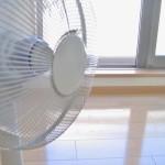 犬に扇風機は暑さ対策になる?