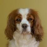 夏の湿気と愛犬の耳掃除