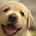 高齢犬と白内障