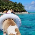 犬と海へお出かけの注意点!