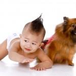 高齢犬・老犬のおむつ活用法