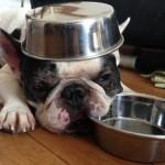 高齢犬の食事で注意すること