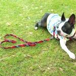 犬には胴輪と首輪、どちらがいい?