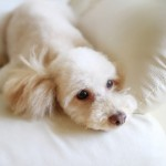 愛犬の便秘、どうすればいい??