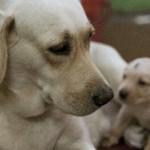 人とは違う?犬の妊娠と出産について