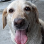高齢犬・老犬と不飽和脂肪酸