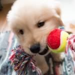 犬のおもちゃ、種類と特徴♪