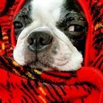 愛犬の冬の温か対策