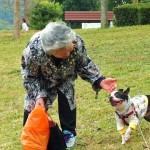 老犬と難聴、上手な付き合い方