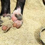 夏のダメージに気を付けたい、犬の肉球