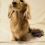 高齢犬・老犬もトレーニングがおすすめな訳とは?