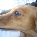 愛犬がガンと戦うとき。その治療法の種類とは?