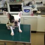 犬と酵素の関係の落とし穴!