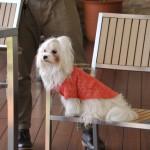 愛犬とドッグカフェで上手に過ごすには?