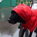 台風と犬、何か影響はあるの?