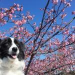 春に気を付けたい犬にストレスがかかる特徴