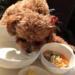 高齢犬の食事を見直す
