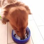 高齢犬の食事 おすすめの食材とは?