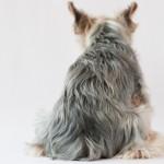 犬が地面にお尻を擦りつけるのは何故?