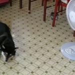湿度が重要!犬の暑さ対策