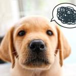 ペットホテルに愛犬をお泊り♪気を付けることは?