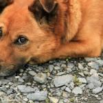 老犬と難聴。原因と対策は?