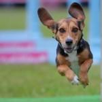 犬はなぜ、夏においやすい?