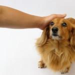 犬にとっても大切な「肝臓」の病気