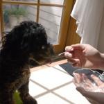 老犬の介護食にも便利な「ゼラチン」