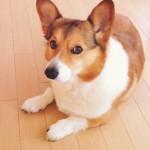 見極めが大事!愛犬の下痢の原因と対策